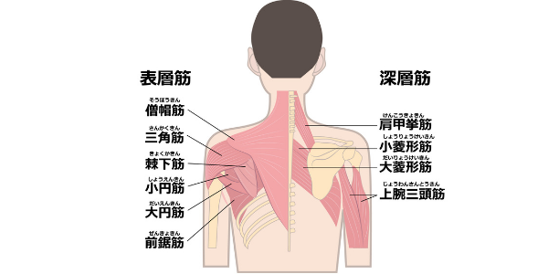 肩を開くのに必要な筋肉の図