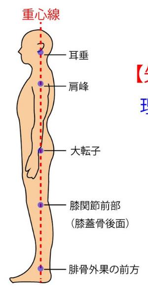 矢状面からみた正しい姿勢の図