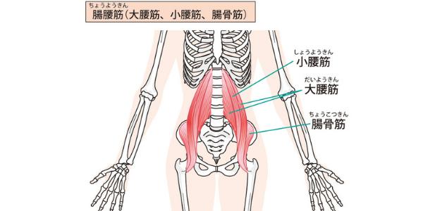 腸腰筋を表した図